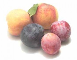 Beals orchards - Stone Fruit - Sample the Sierra
