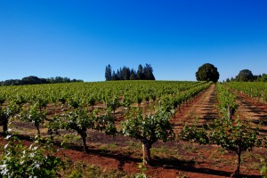 Madrona Vineyards