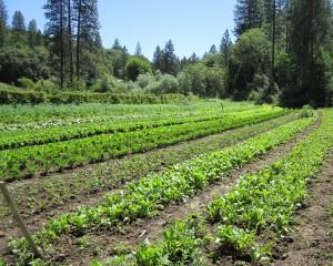 Field at Mountain Bounty Farm