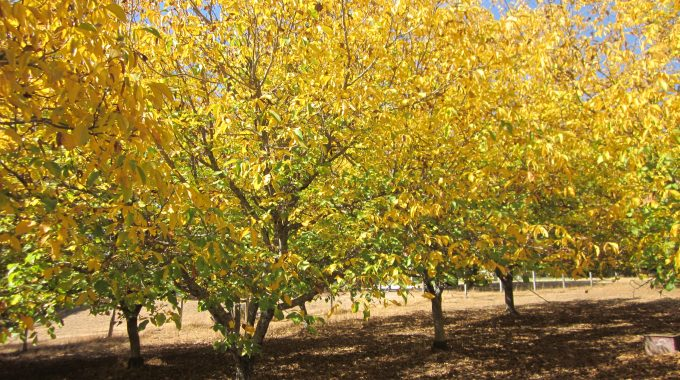 Perry Creek Walnuts: Our Best To You