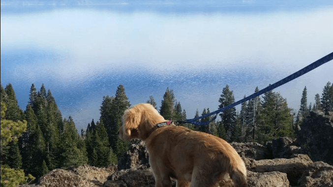 Paw-esome Gear For Your Dog: Tahoe Dog Gear